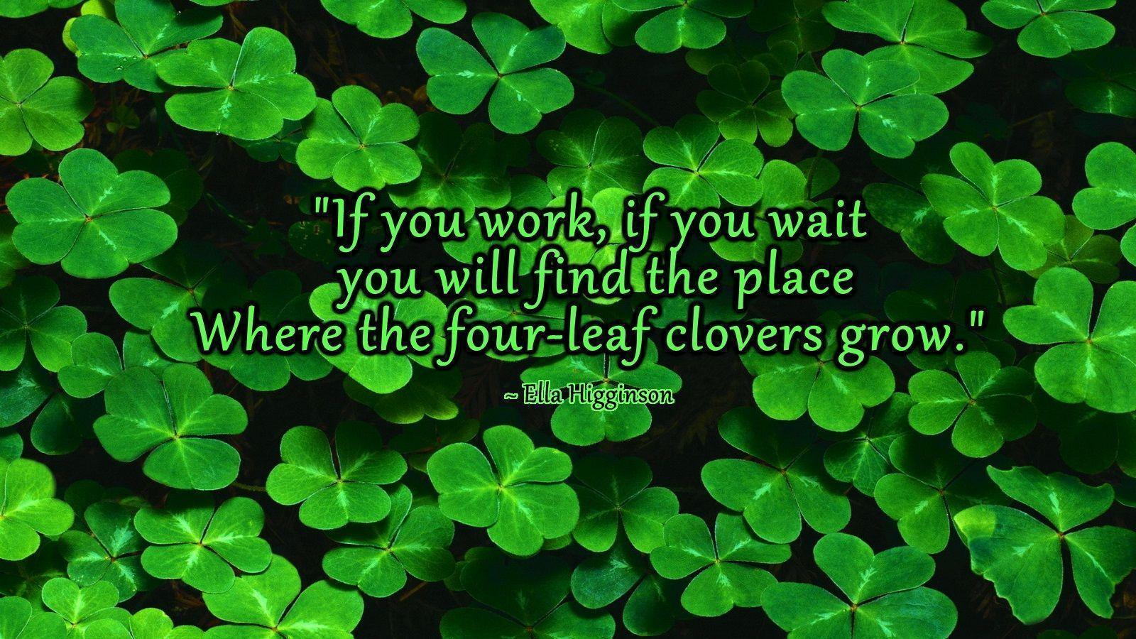 Four Leaf Clover Wallpapers Wallpaper Cave