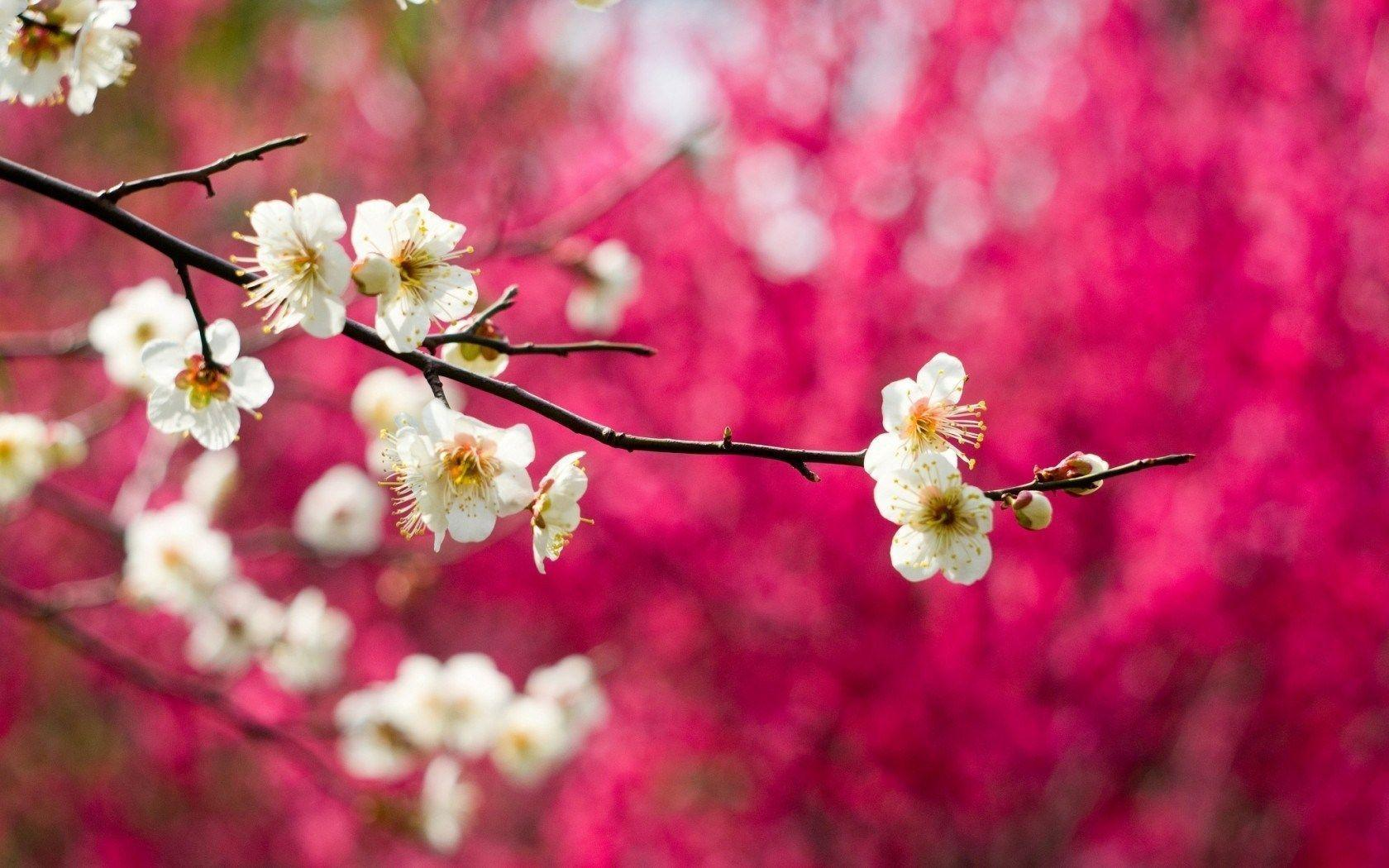 Spring Nature Flowers Hd Desktop 9 HD Wallpapers