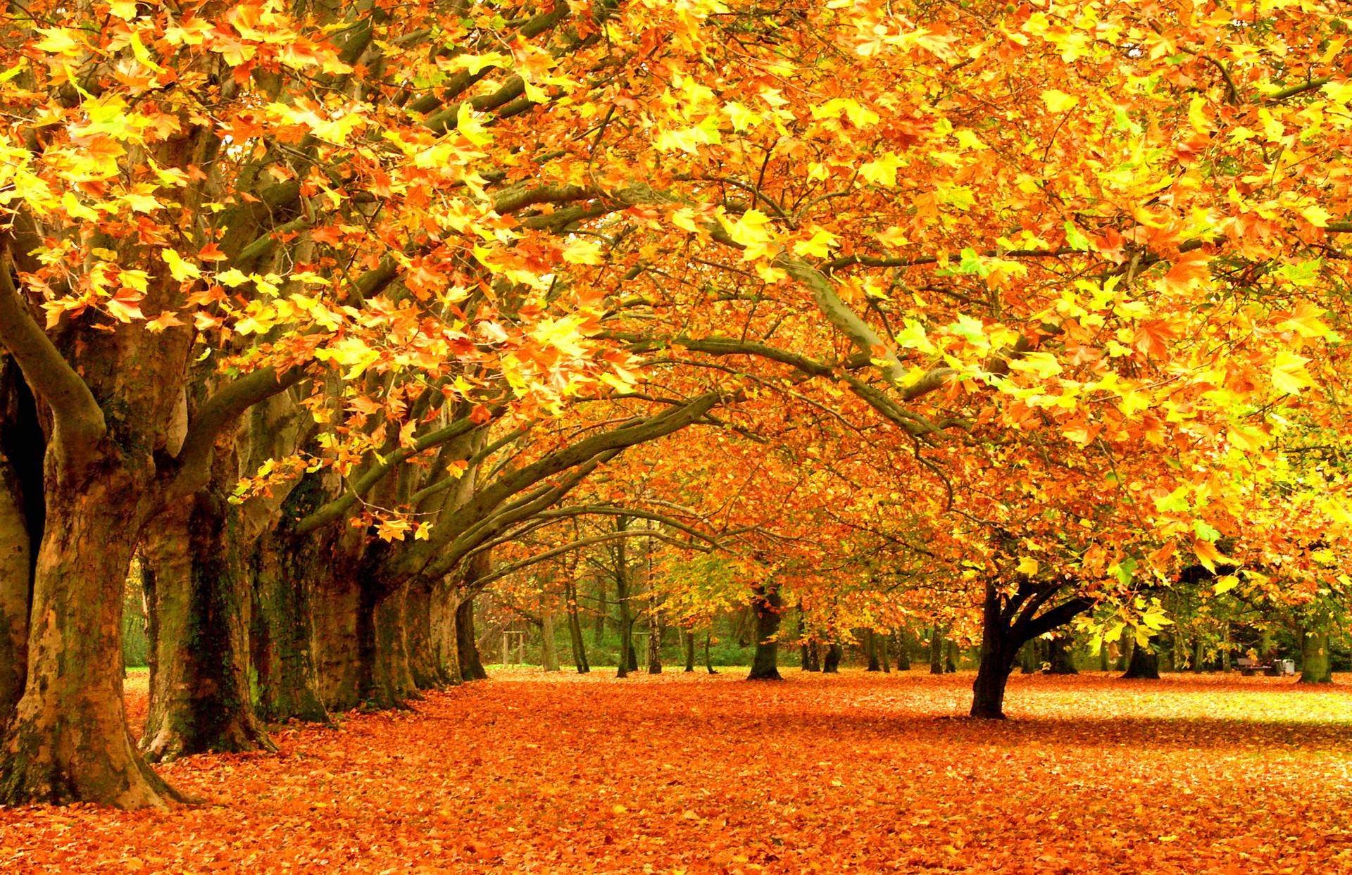 autumn leaves on the bench wallpaper full hd 10831 wallpaper