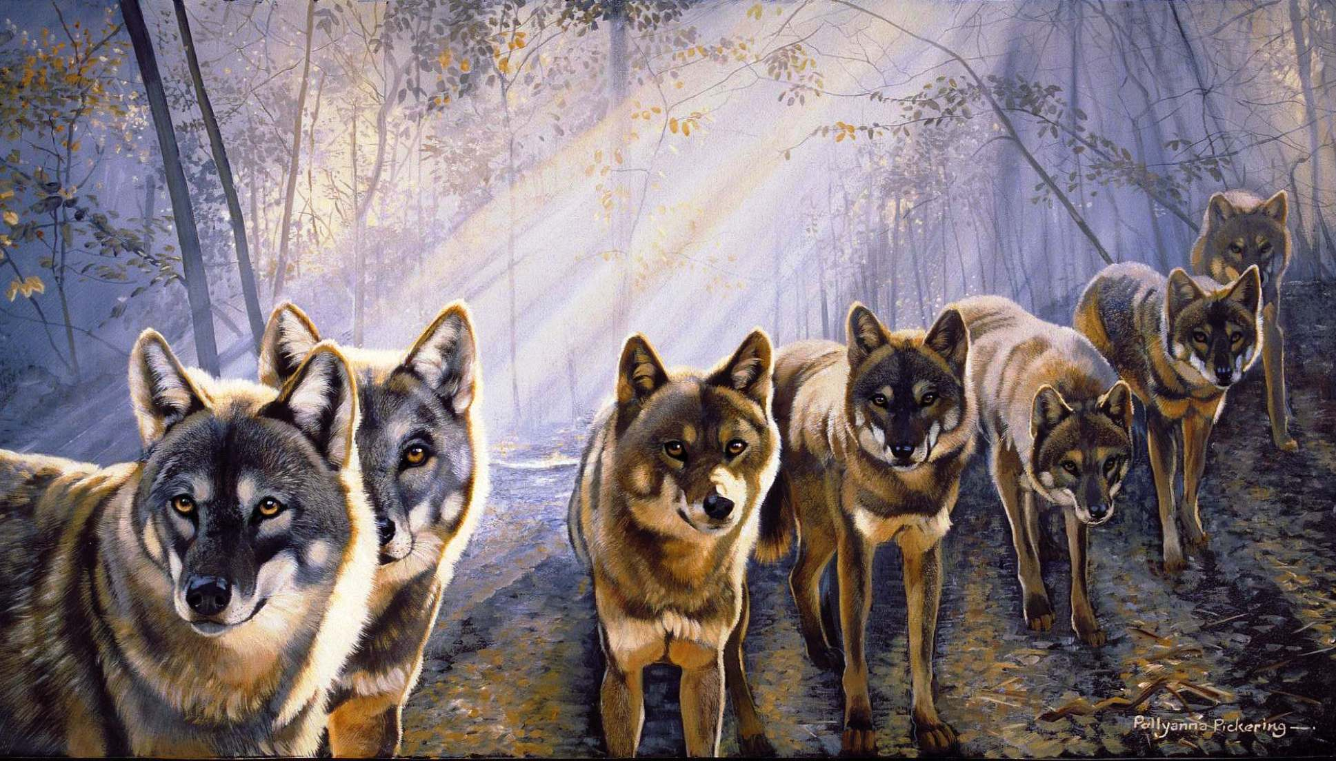 wild wolf pack wallpaper - photo #35
