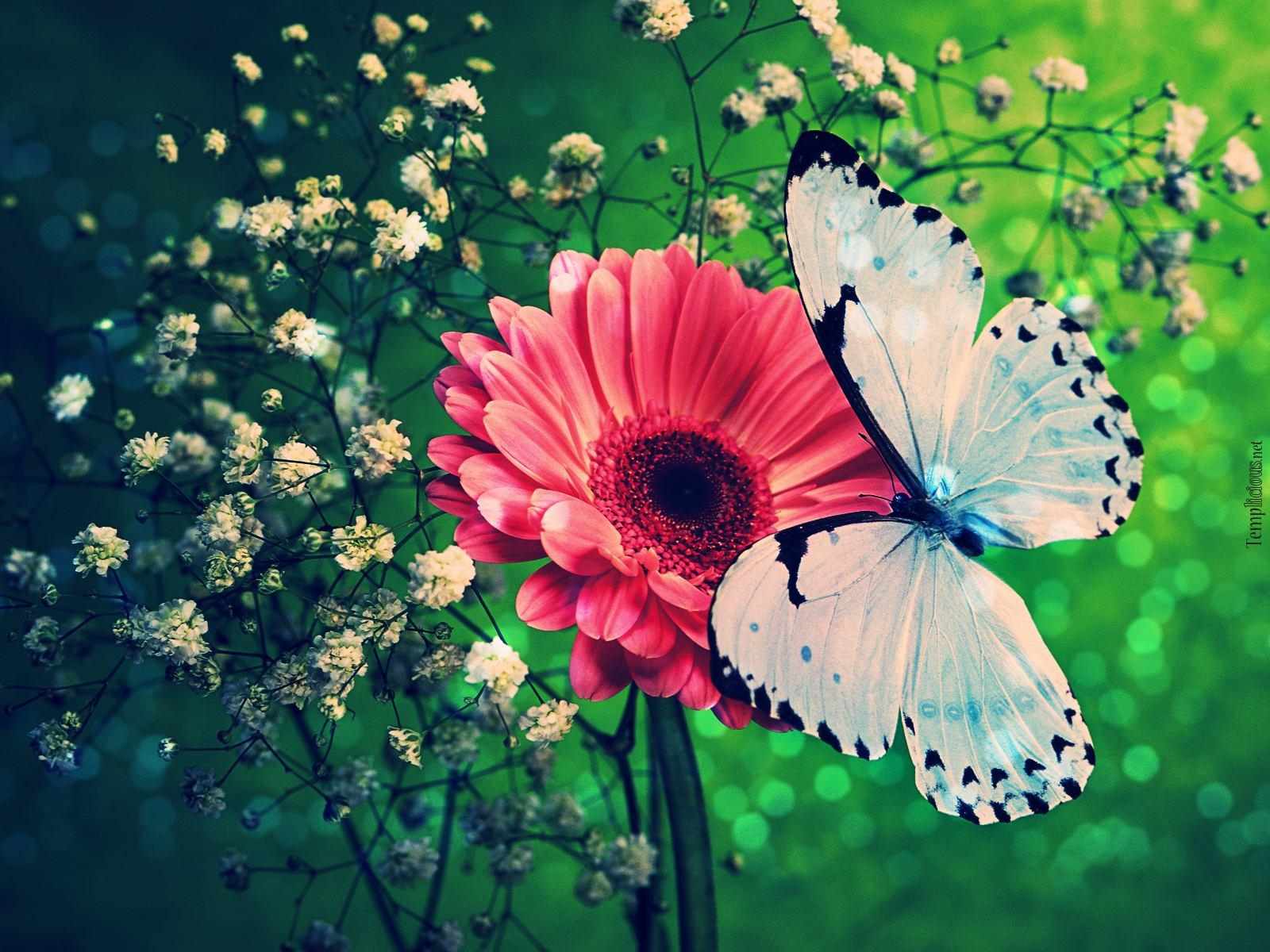 Wallpapers Butterflies - Wallpaper Cave