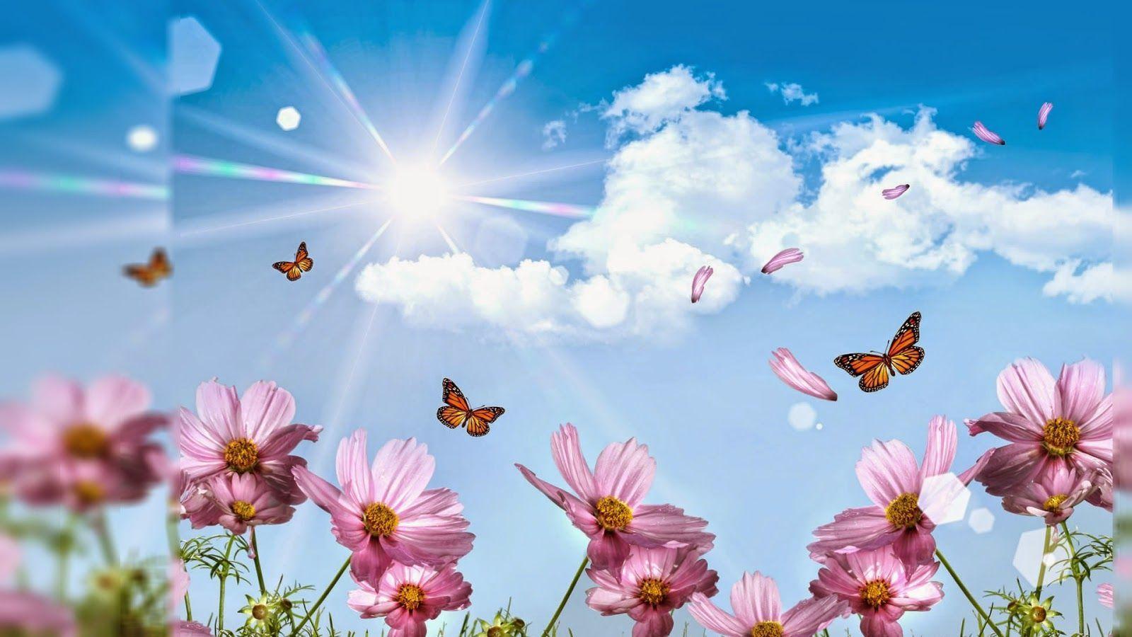 3 Delightful Flowers Wallpaper Desktop Background Full Screen