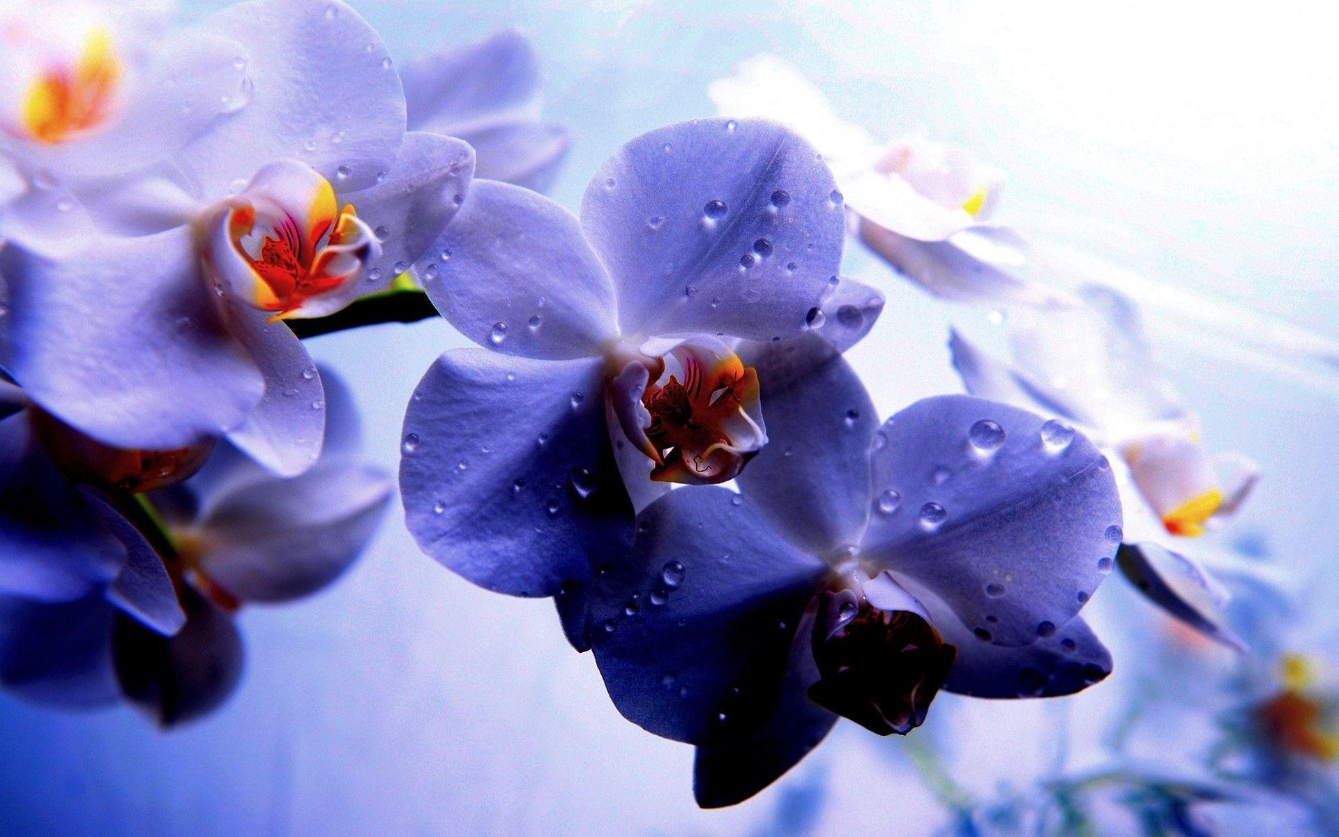 purple orchid wallpapers wallpaper cave