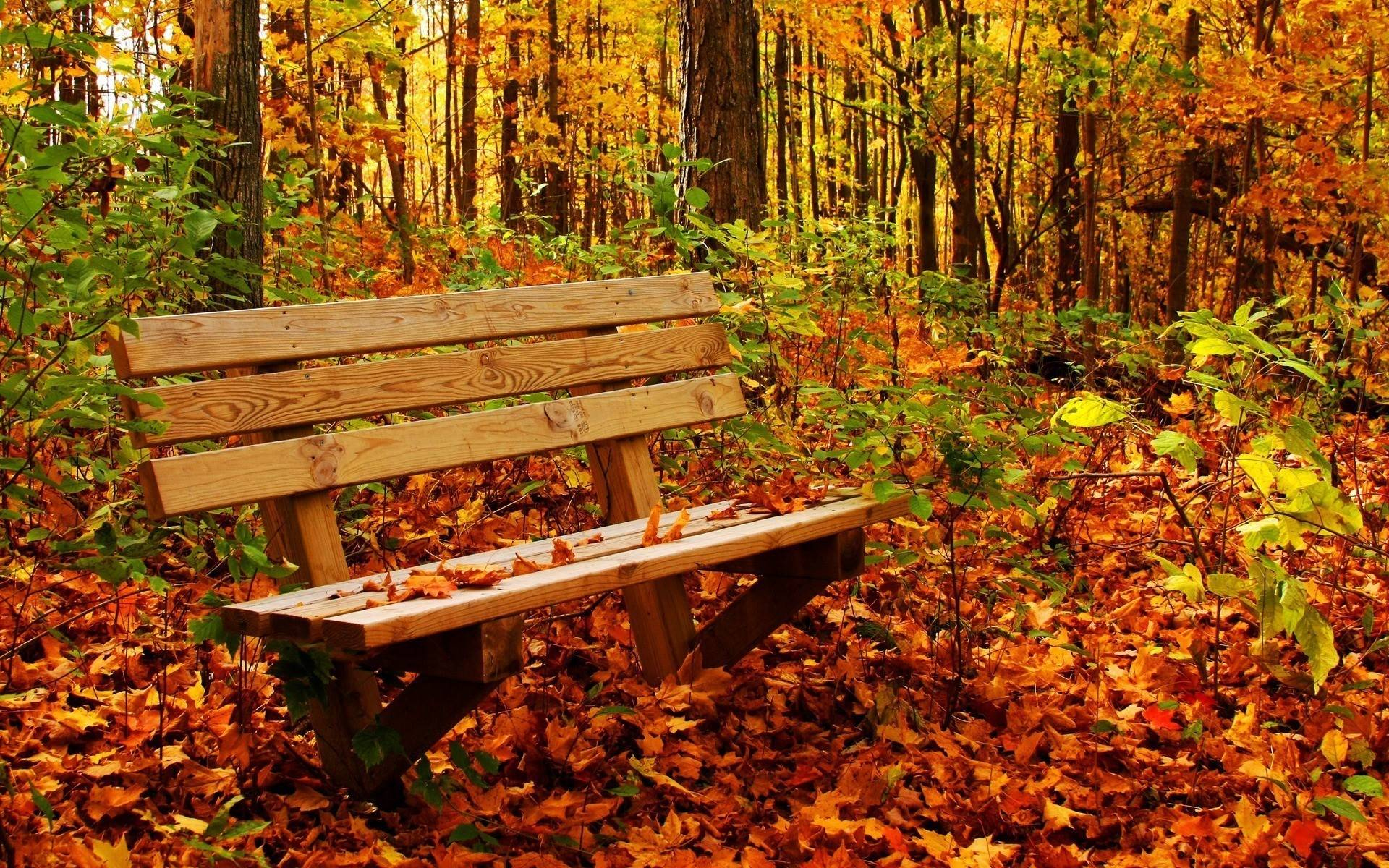 Autumn Nature Wallpaper Hd Desktop 9 HD Wallpapers