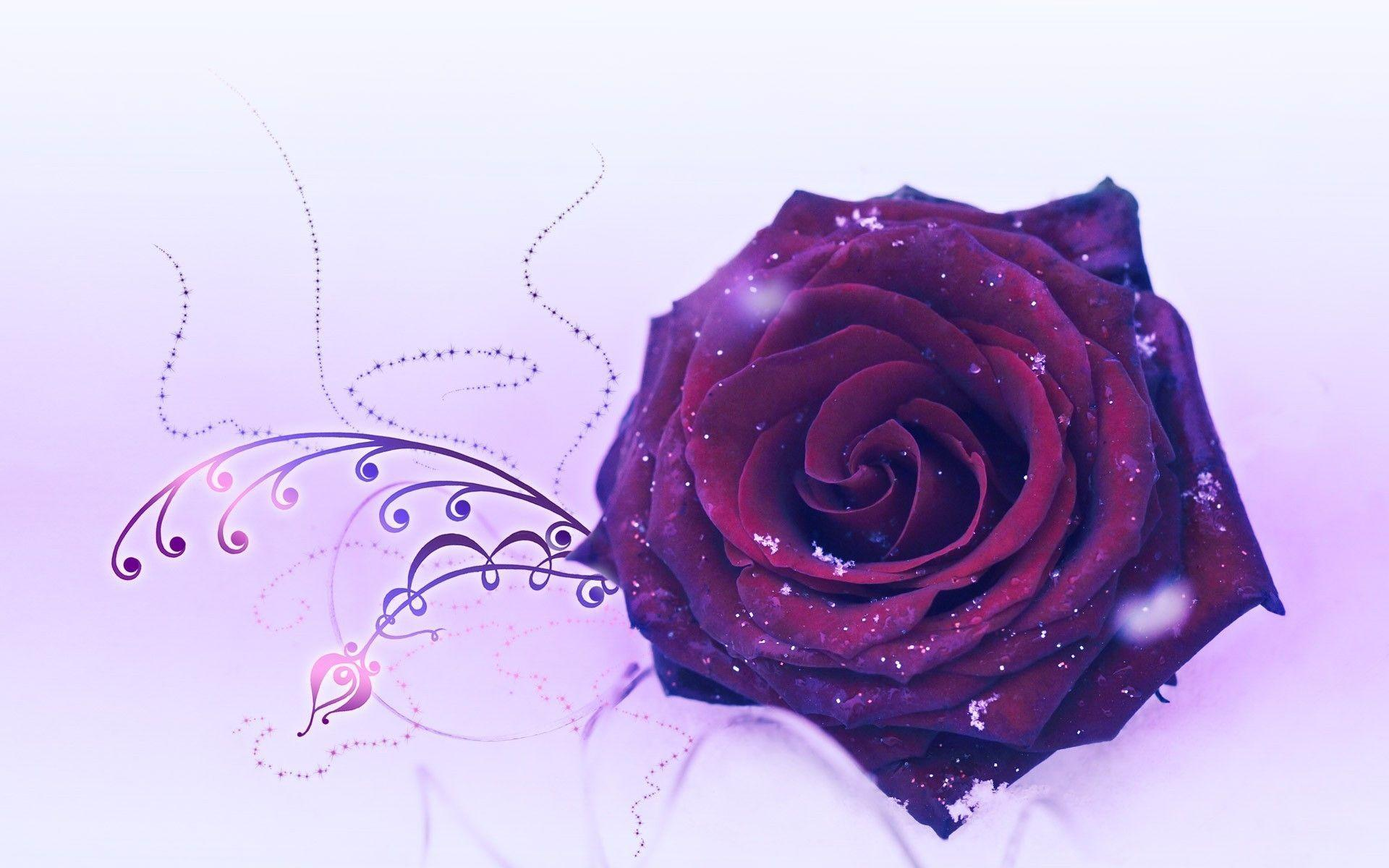PurpleRosesWallpapersWallpaperCave