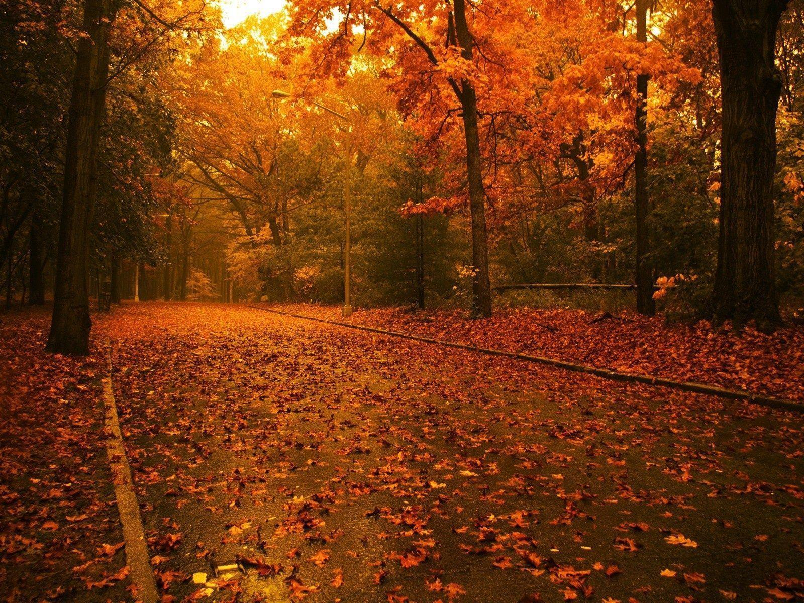 Fall Tumblr Backgrounds Trees