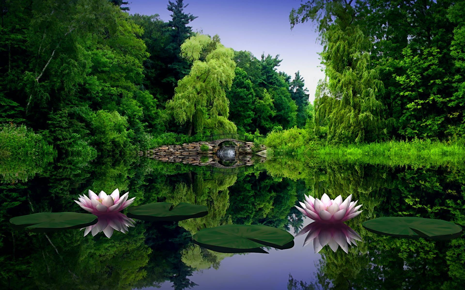 Lotus Flower Wallpaper Background