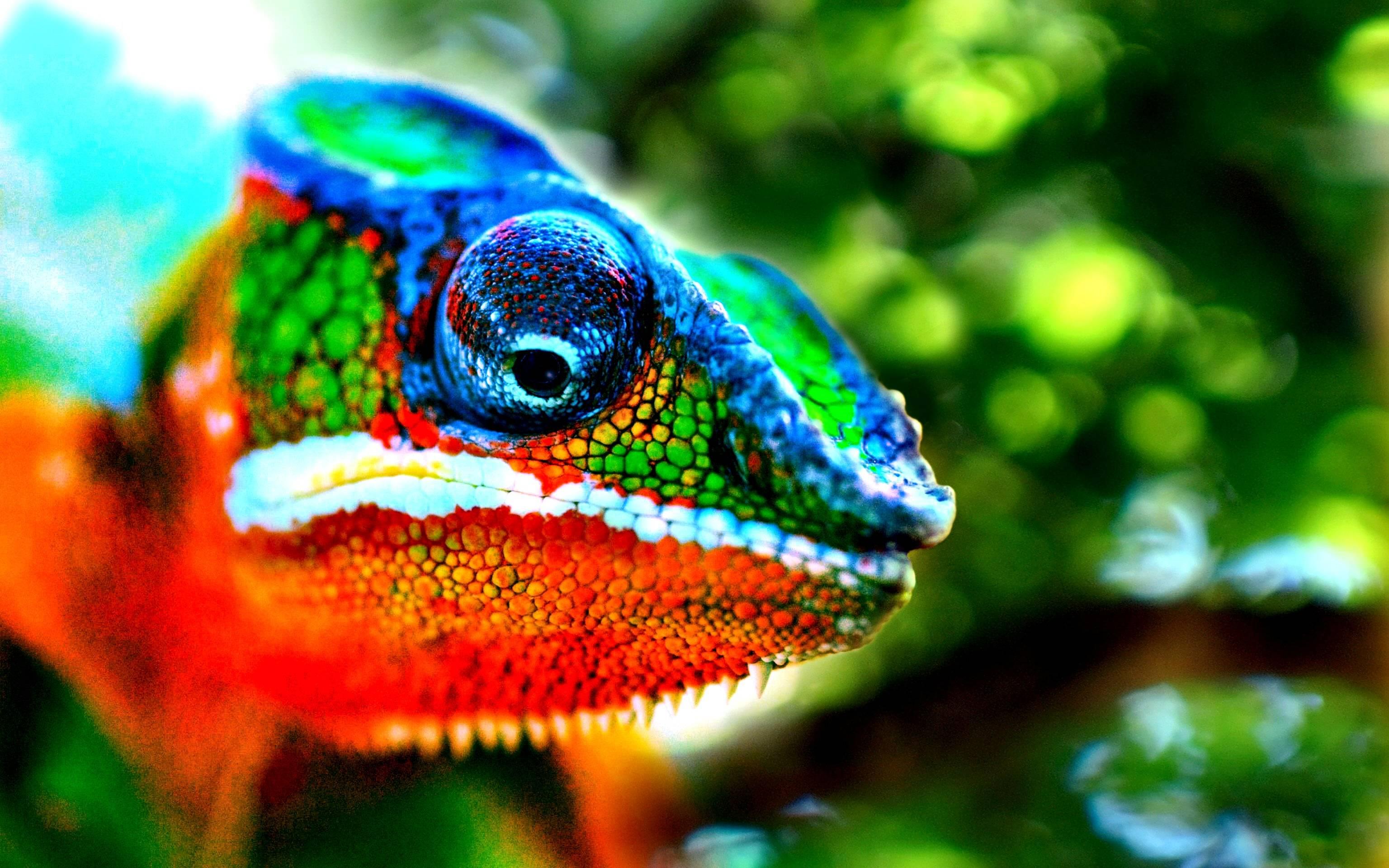 chameleon wallpaper 9661 - photo #24