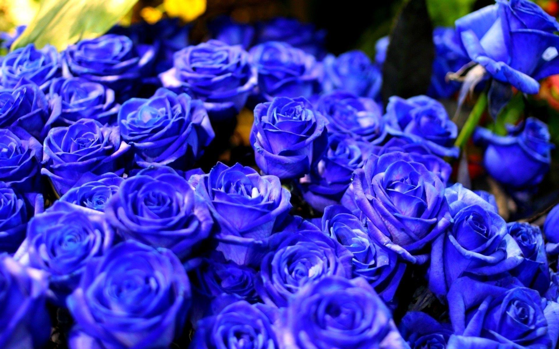Blue Rose Backgrounds   Wallpaper Cave