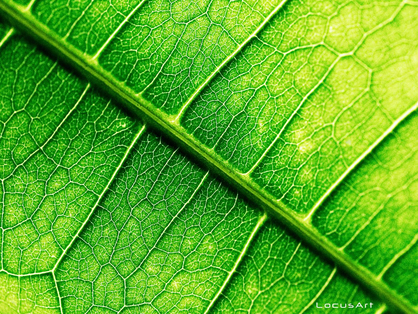 leaf background wallpaper - photo #45