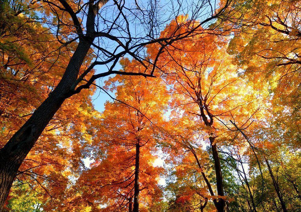 autumn leaves desktop wallpapers wallpaper cave