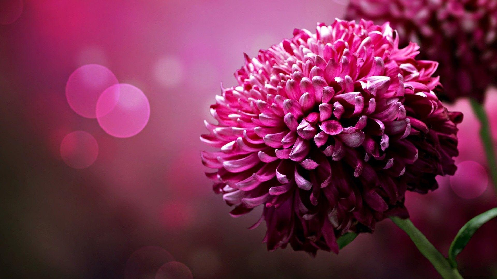Page 1756 | Flower wallpapers , Flowers wallpapers hd , Flowers ...