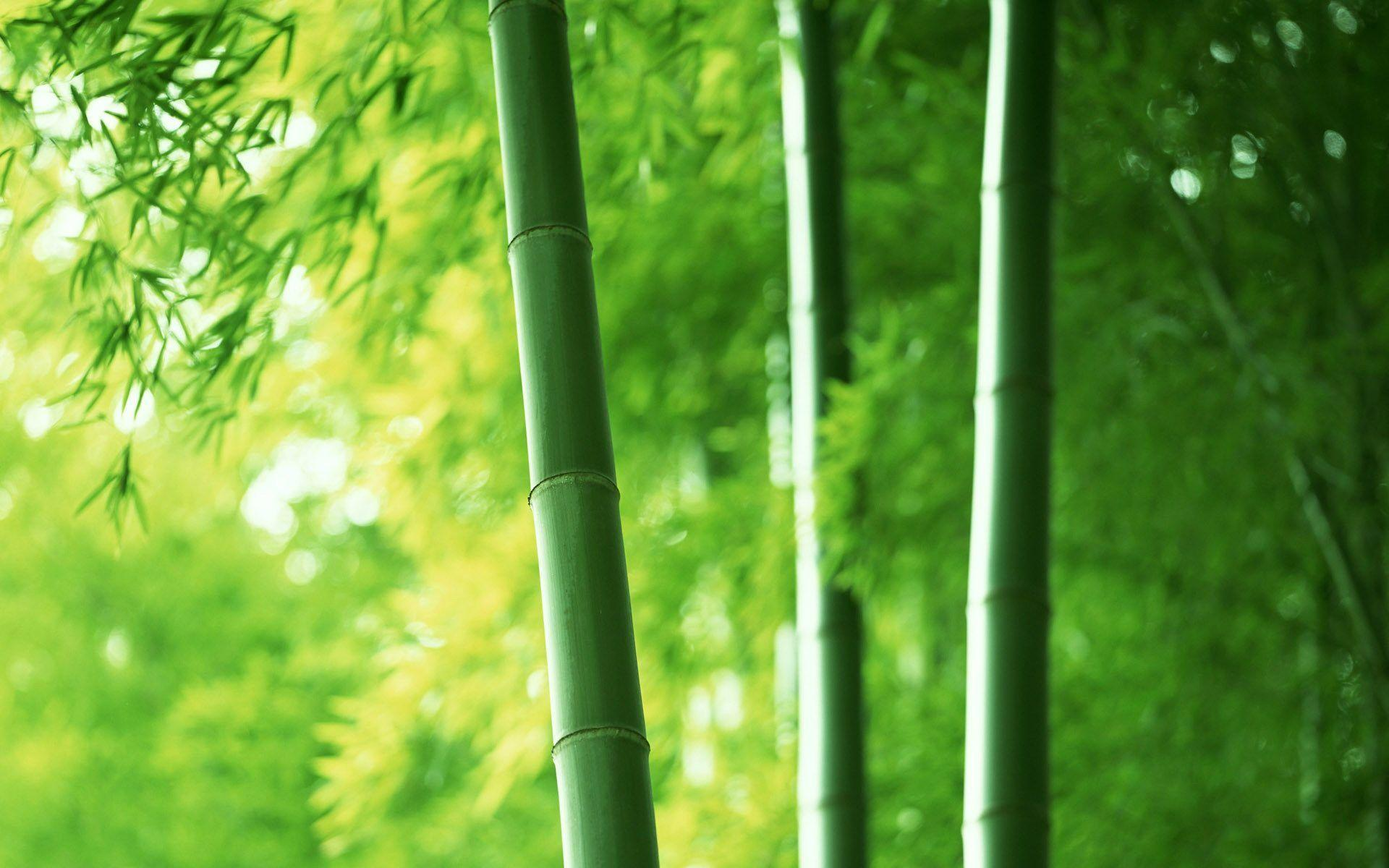 bamboo wallpaper by doantrangnguyen - photo #2