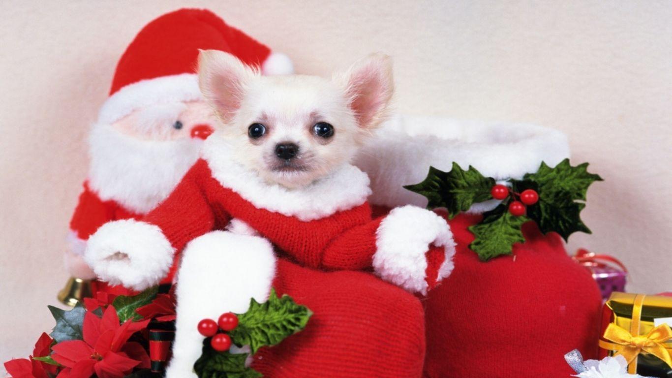 christmas puppy wallpaper - photo #33