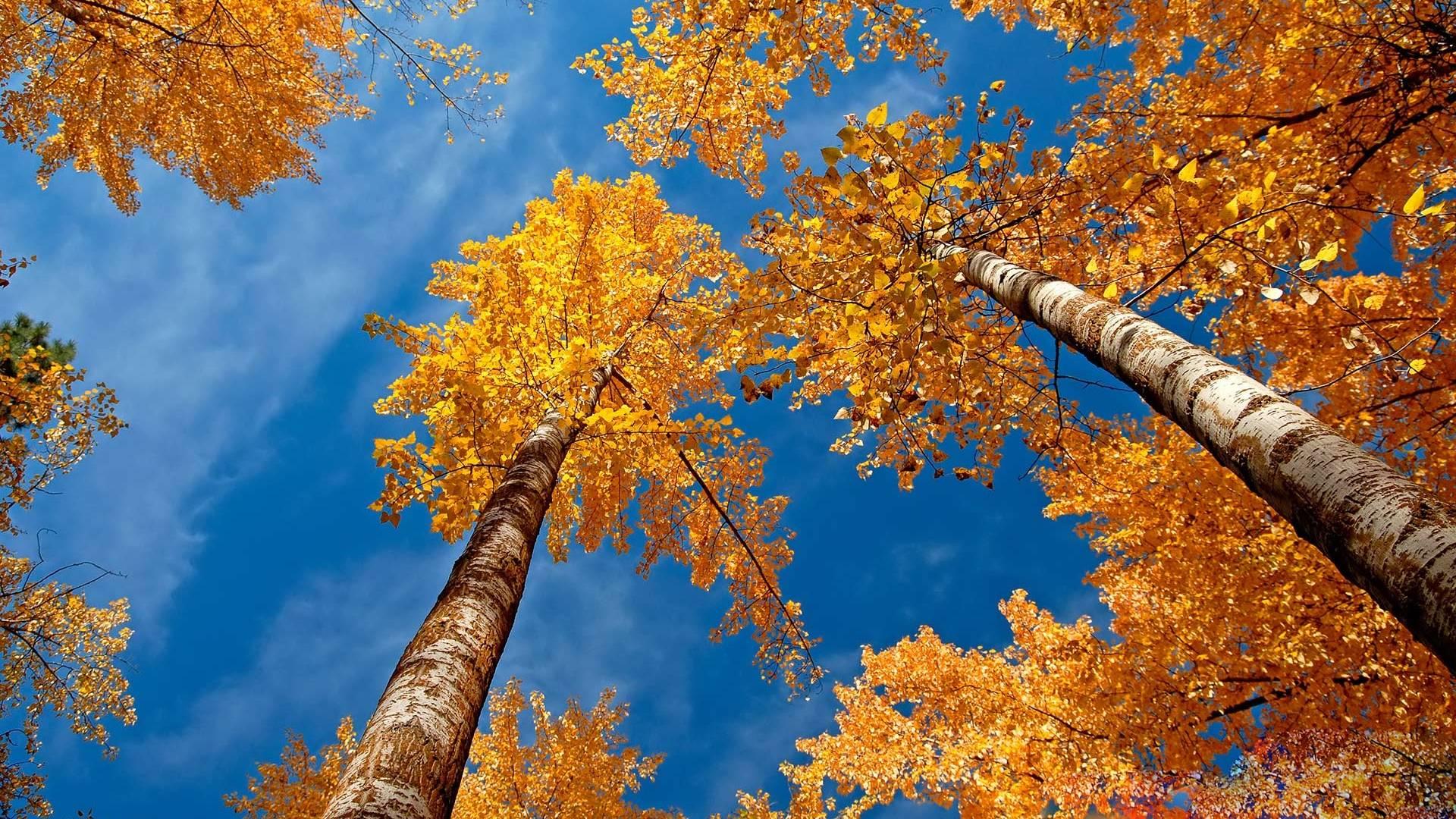 in autumn desktop - photo #8