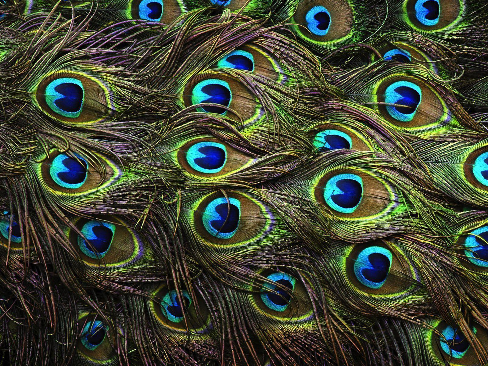 awesome colored feathers wallpaper - photo #27