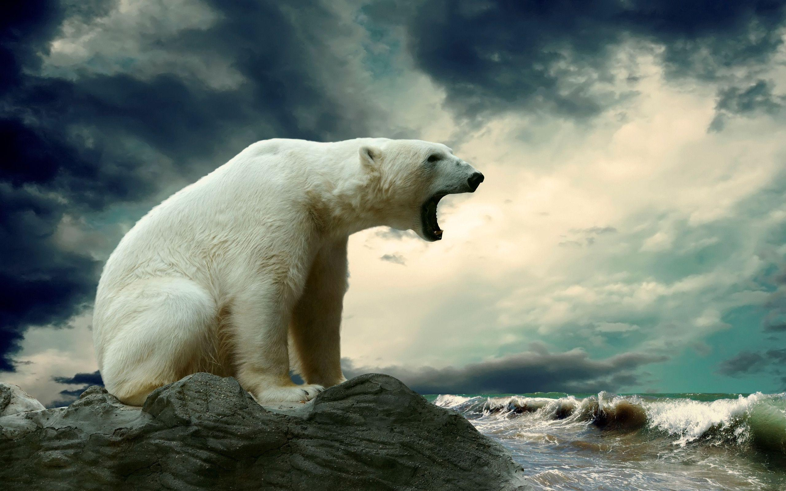polar bear wallpapers - wallpaper cave