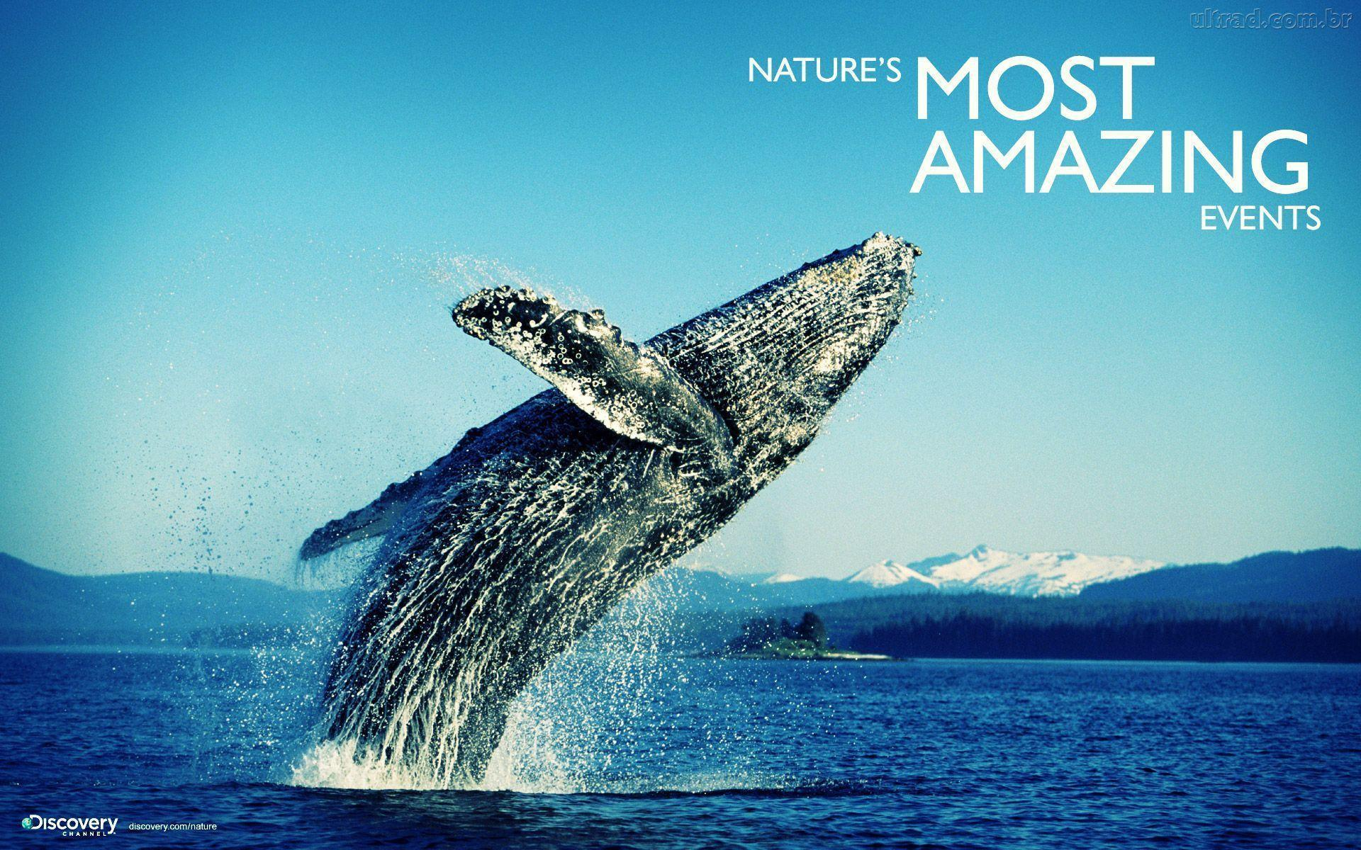 Wallpapers For Discovery Channel Wallpaper
