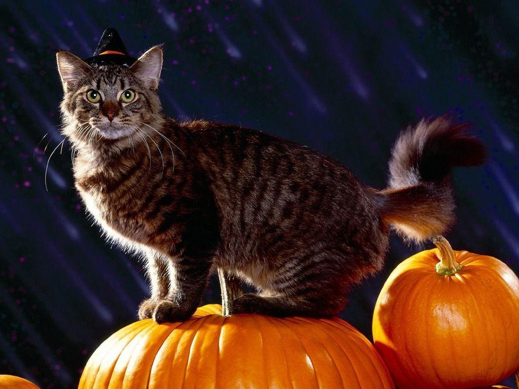 FunMozar – Halloween Cat Wallpapers