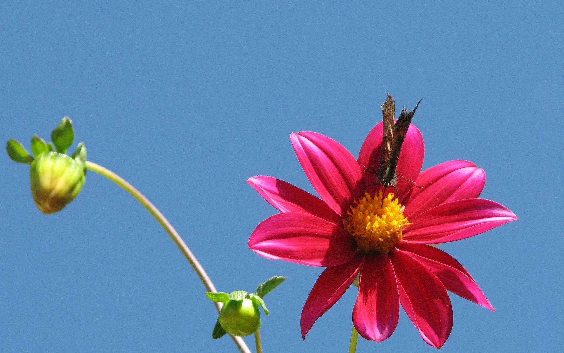 flower wallpapers widescreen space - photo #10