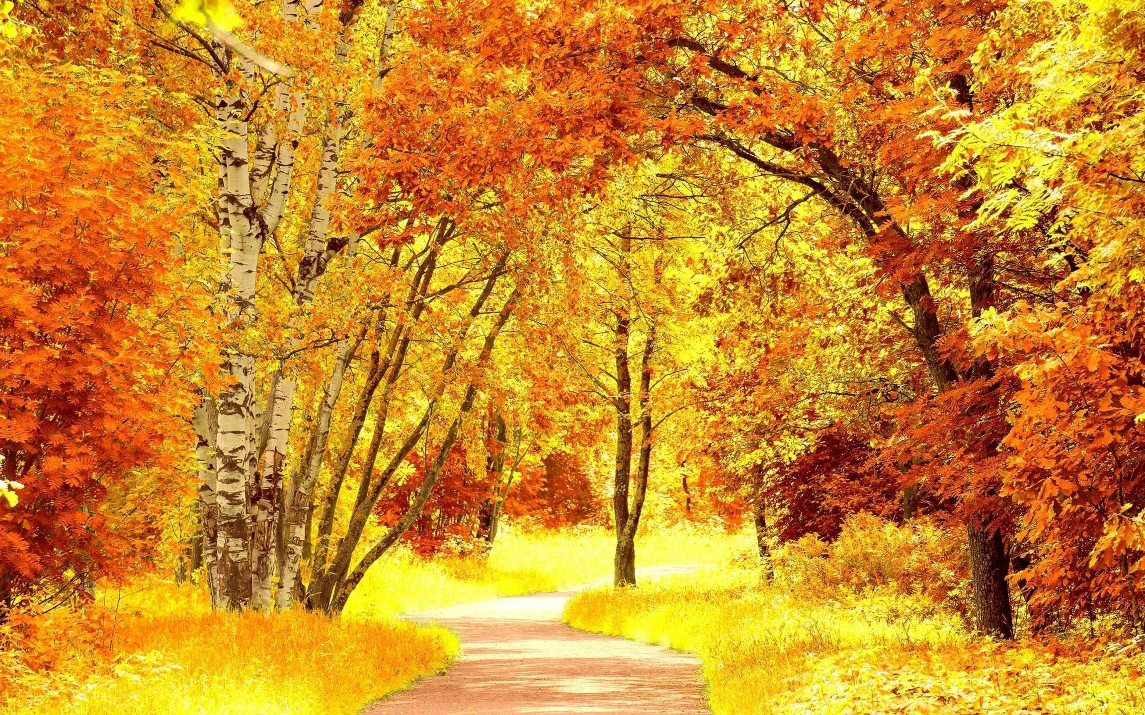 amazing fall foliage wallpapers - photo #11