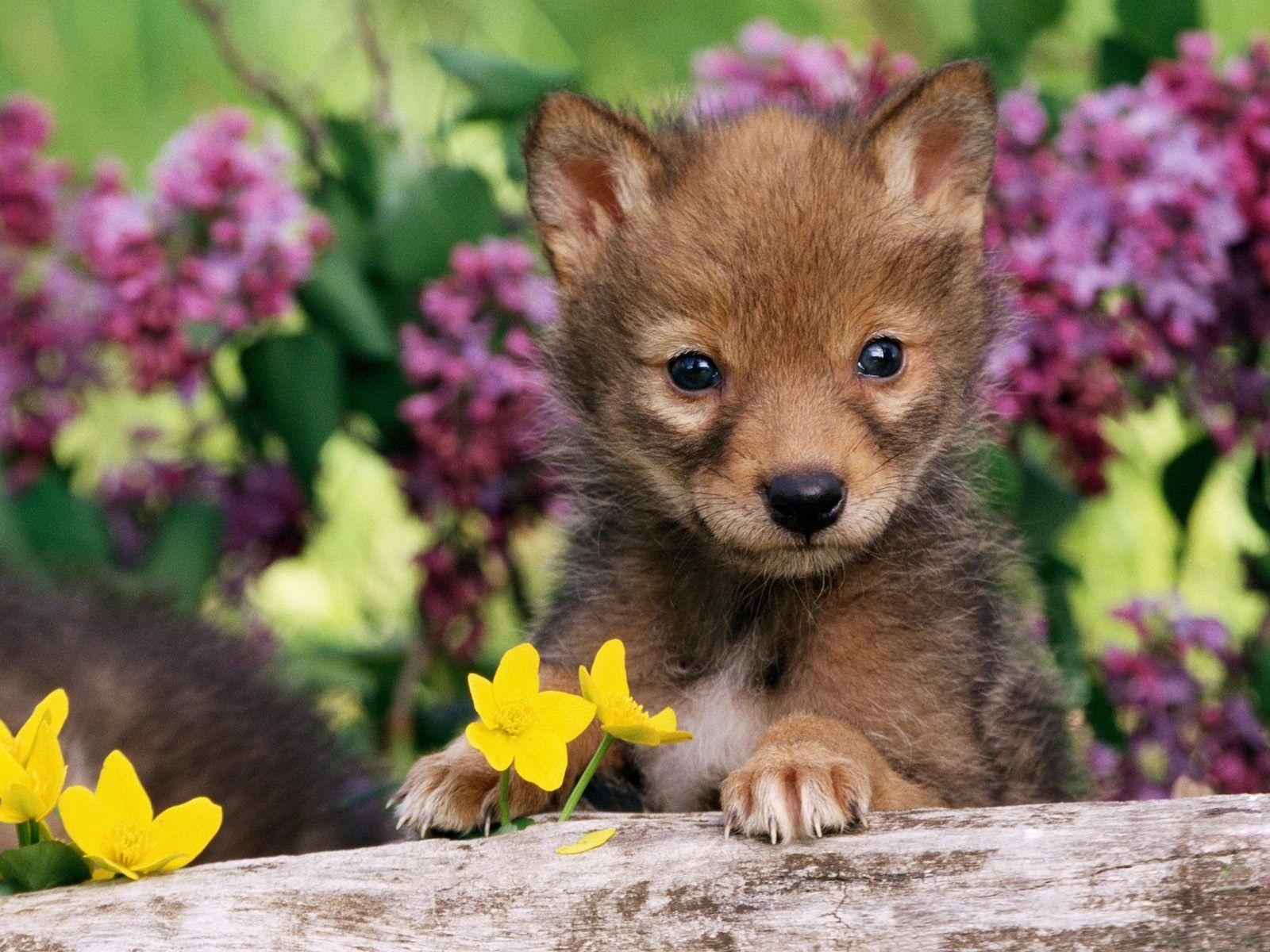 baby animals wallpapers - wallpaper cave