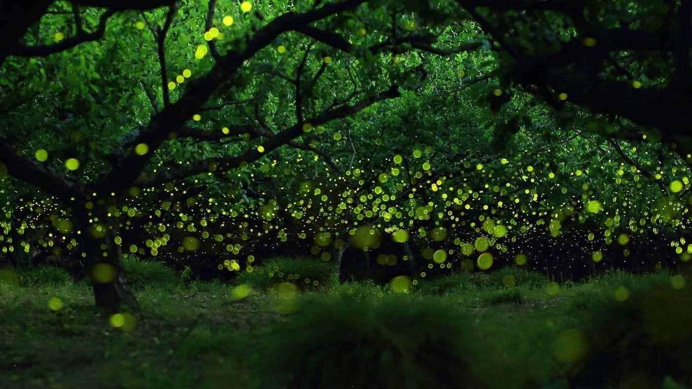 Fireflies At Night Wallpaper - Viewing Gallery