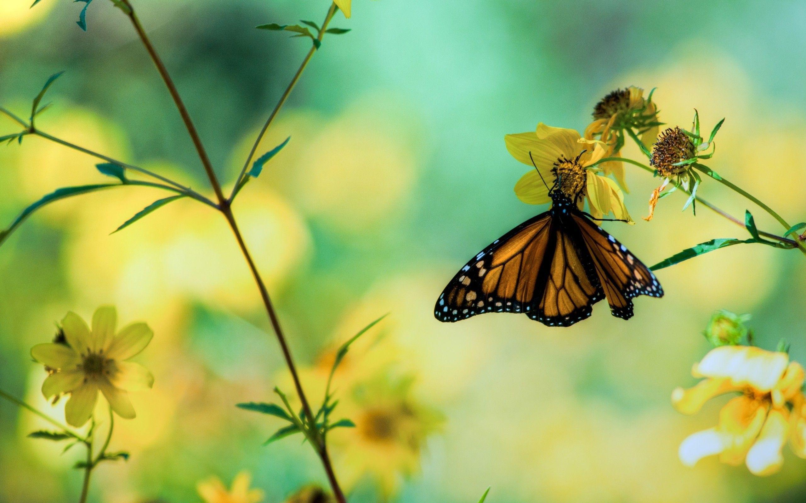 hd rainbow butterfly wallpaper - photo #47