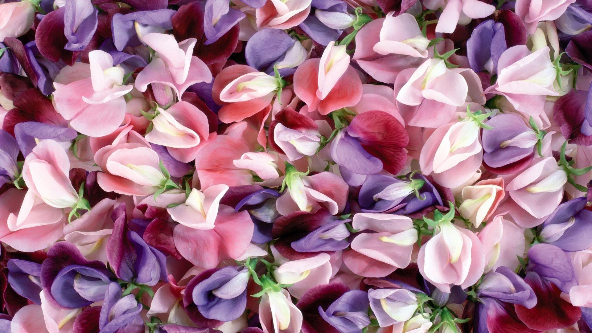 Pink And Purple Flower Backgrounds - Wallpaper Cave