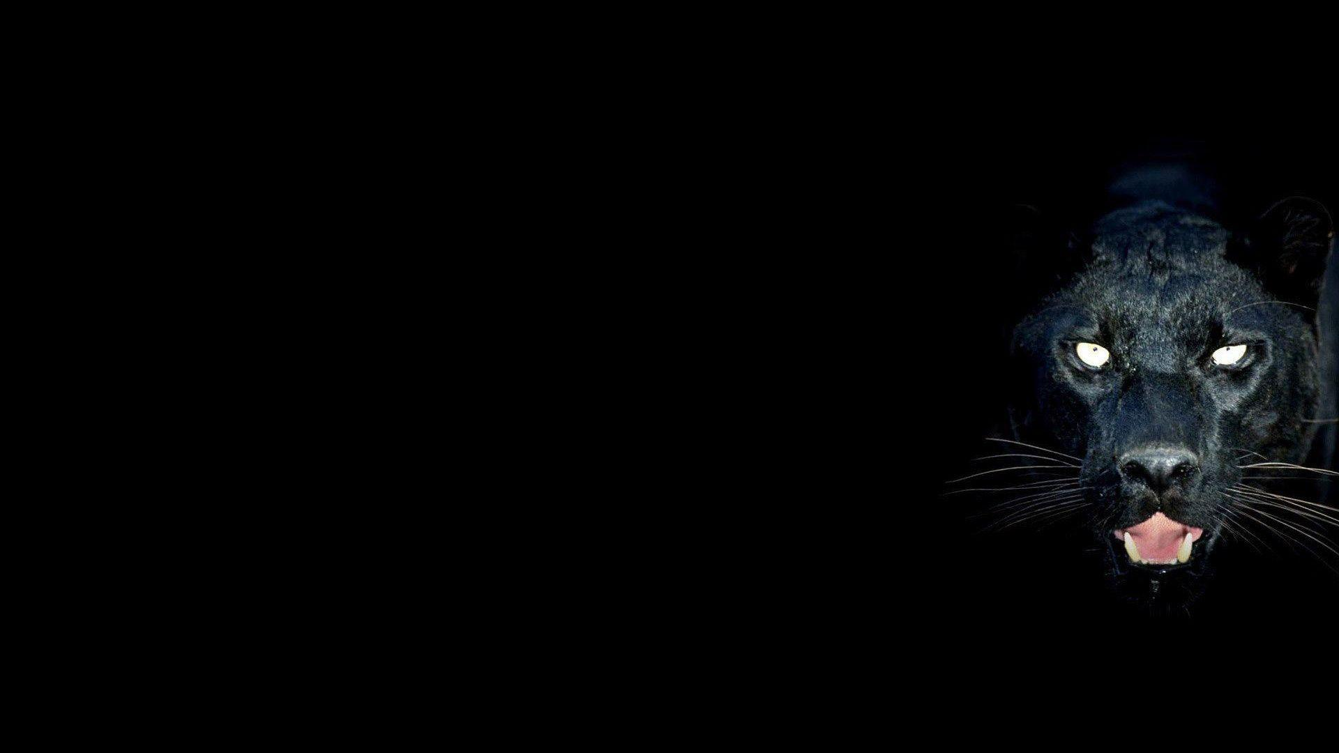 black leopard backgrounds - photo #2