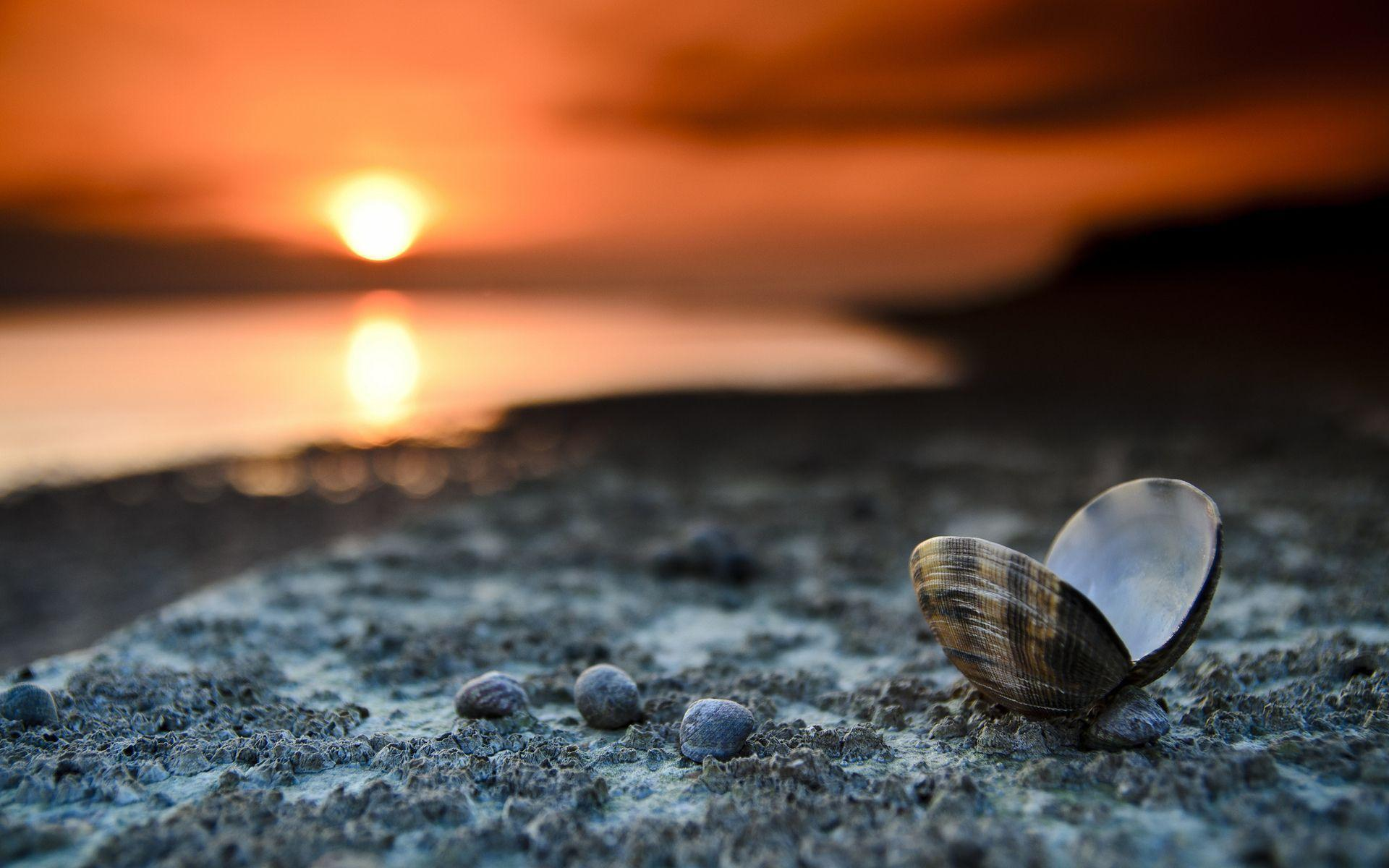 Shells in the sunset wallpaper | Wallpaper Wide HD