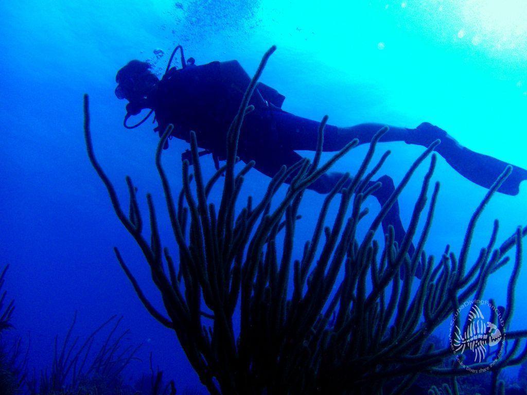 scuba diving wallpaper wallpapers - photo #7