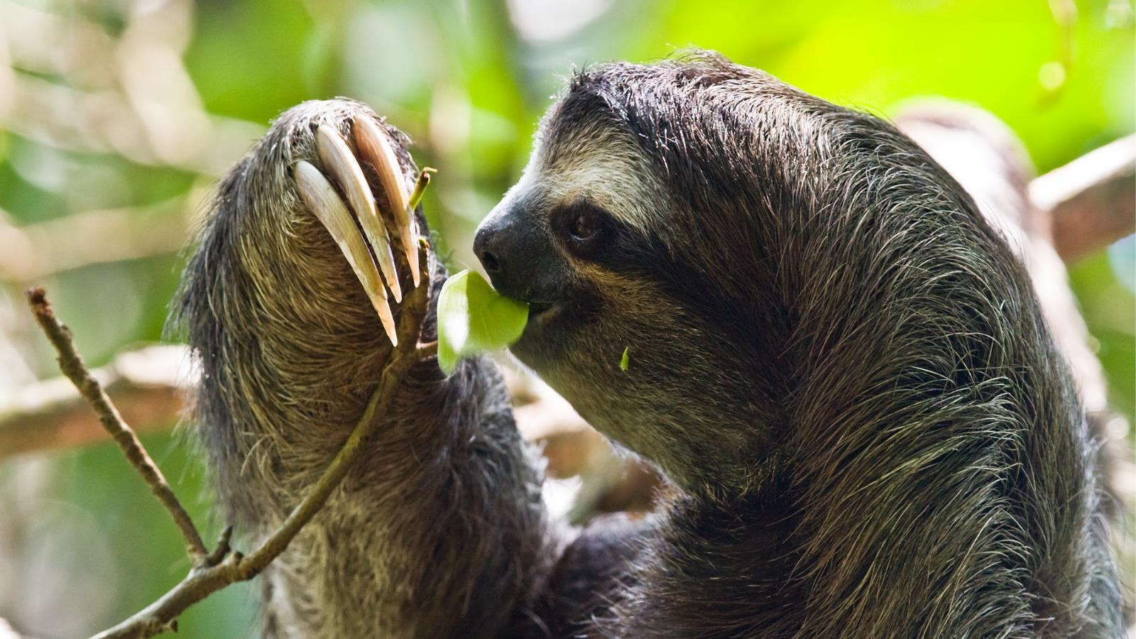 Sloth Wallpapers Wallpaper Cave