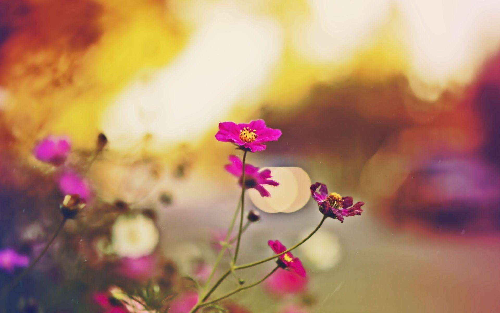 fall flowers wallpaper by - photo #26
