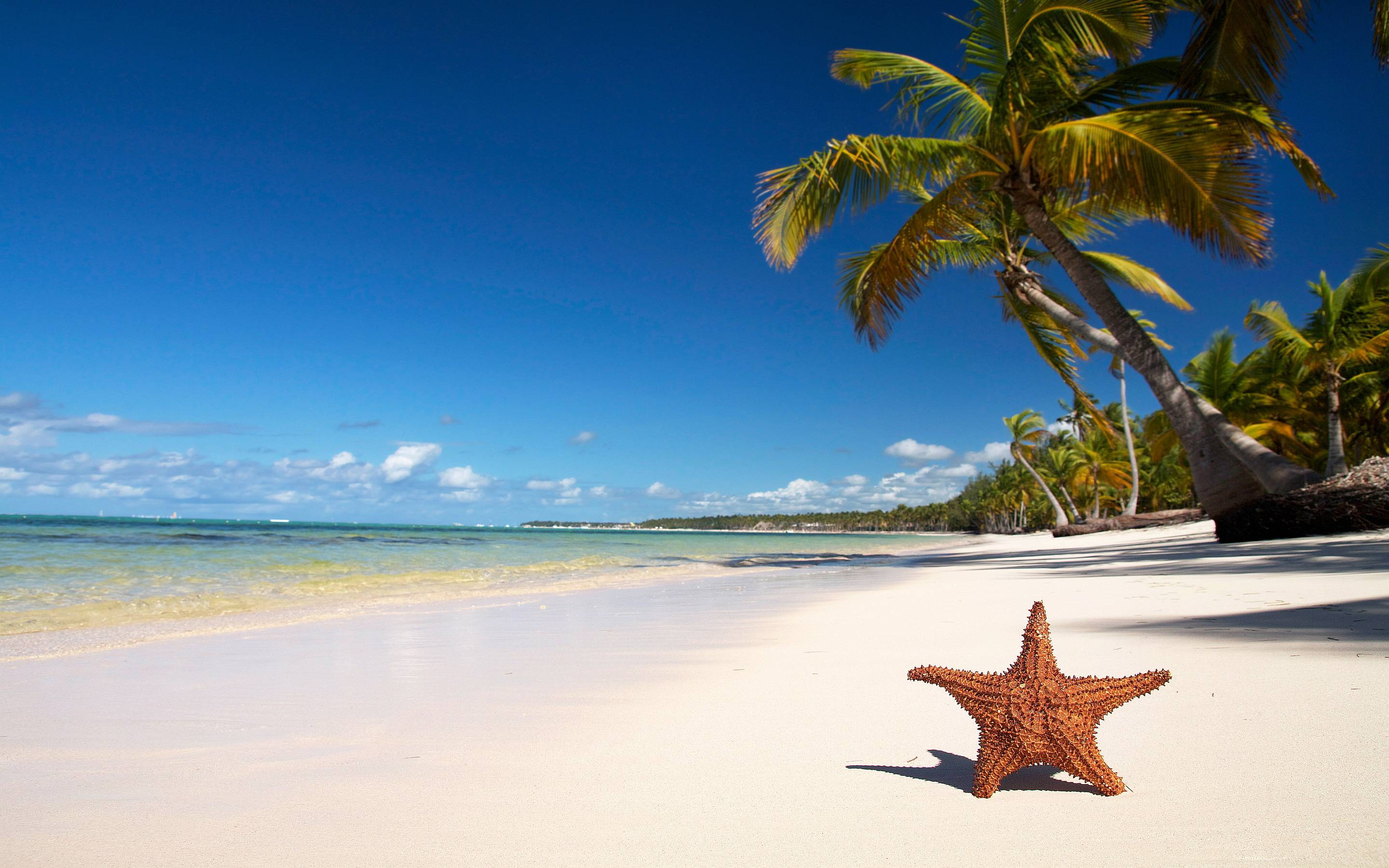 20 tropical backgrounds - photo #21
