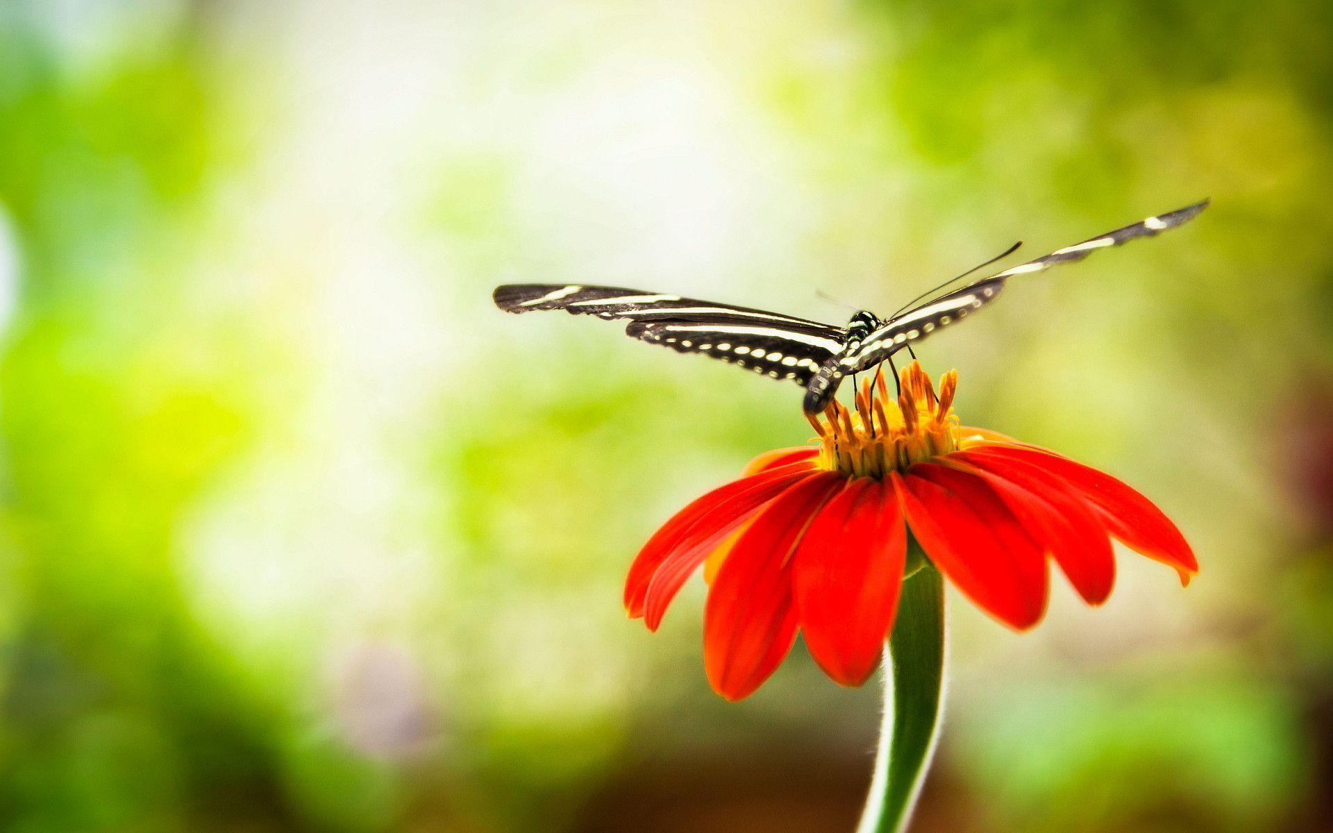 most beautiful flowers wallpapers butterflies - photo #38