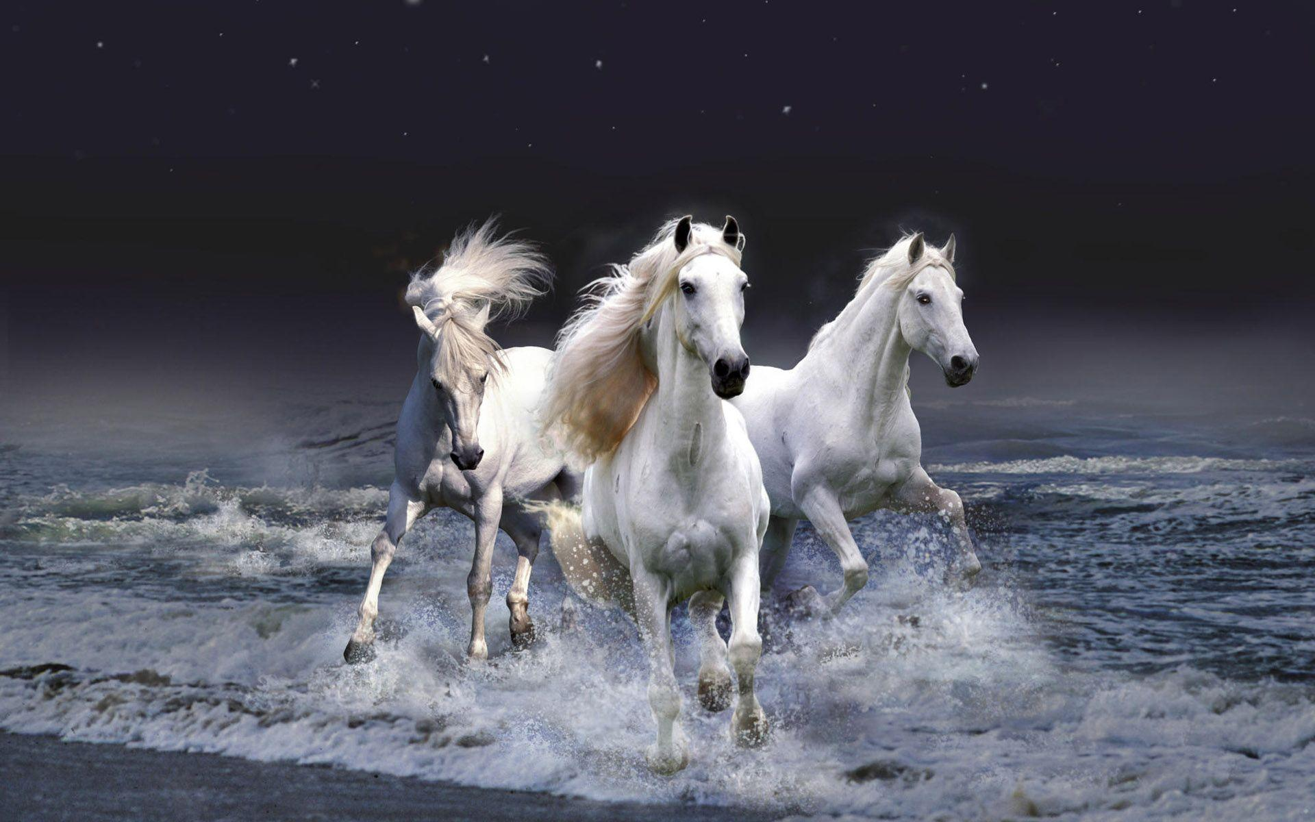 Desktop Wallpapers Horses Wallpaper Cave