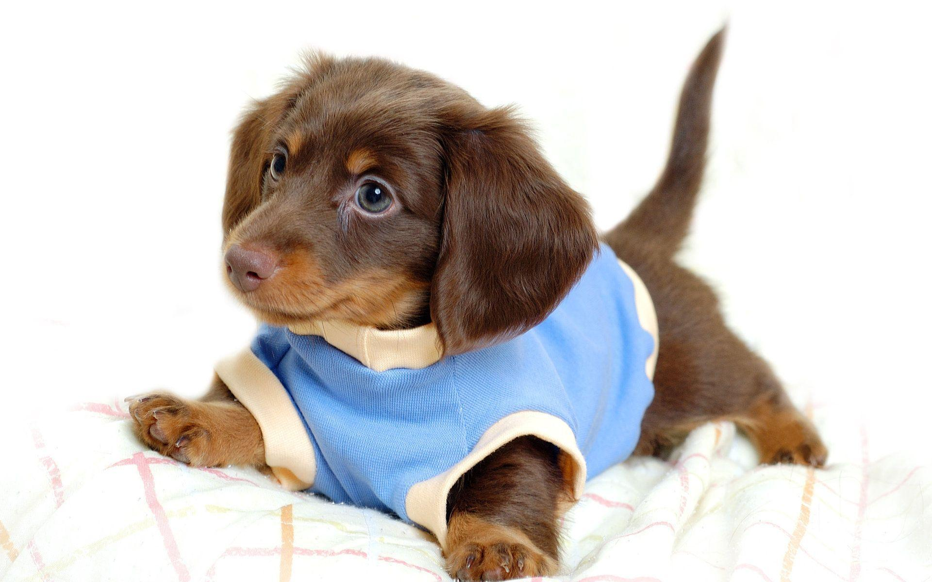 puppy wallpapers hd wallpapers inn