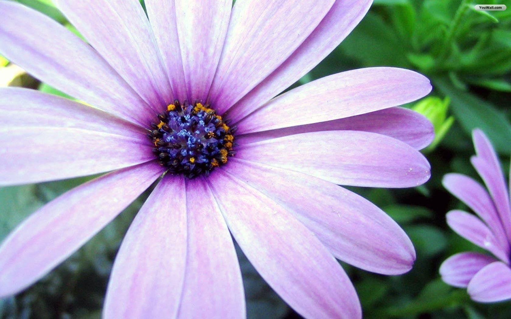 Pretty flower backgrounds wallpaper cave wallpapers for pretty flower backgrounds for desktops mightylinksfo