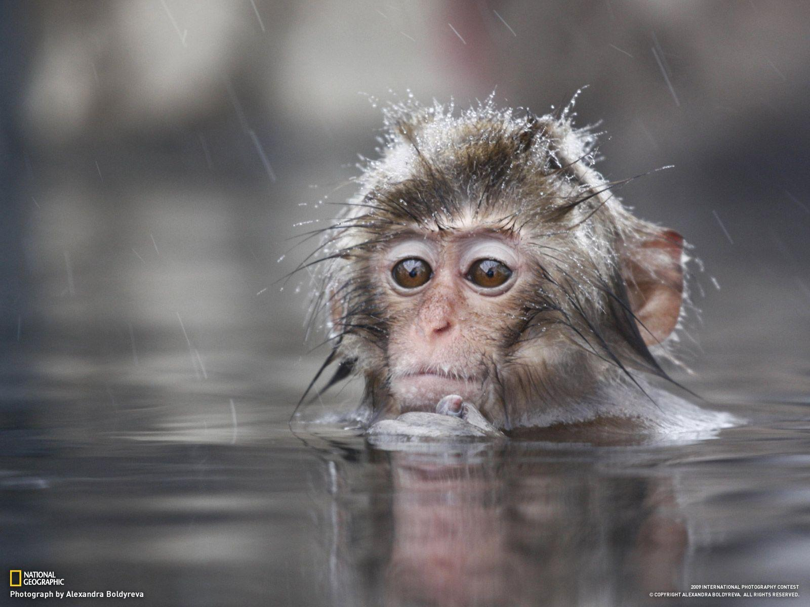 Animals For > Cute Baby Monkey Wallpaper