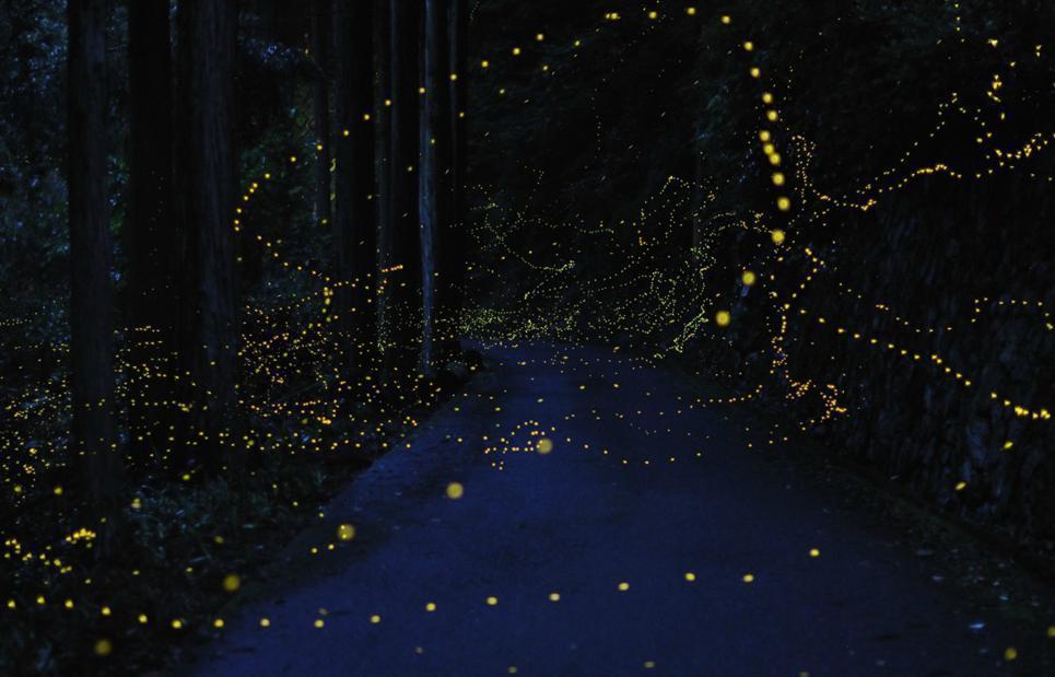 Few awesome long-exposure photos of Golden fireflies | Beautiful ...