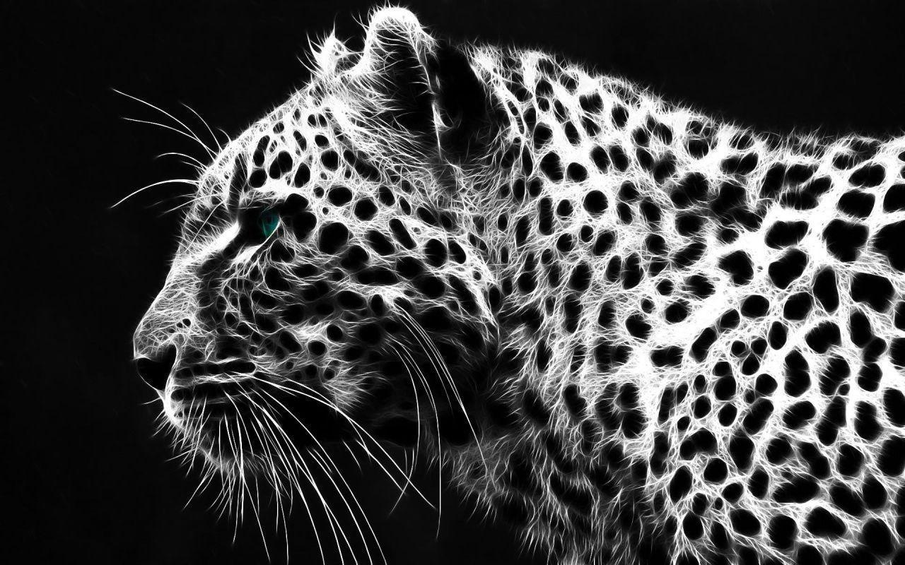Black And White Tiger Background White Tiger Wallpapers...