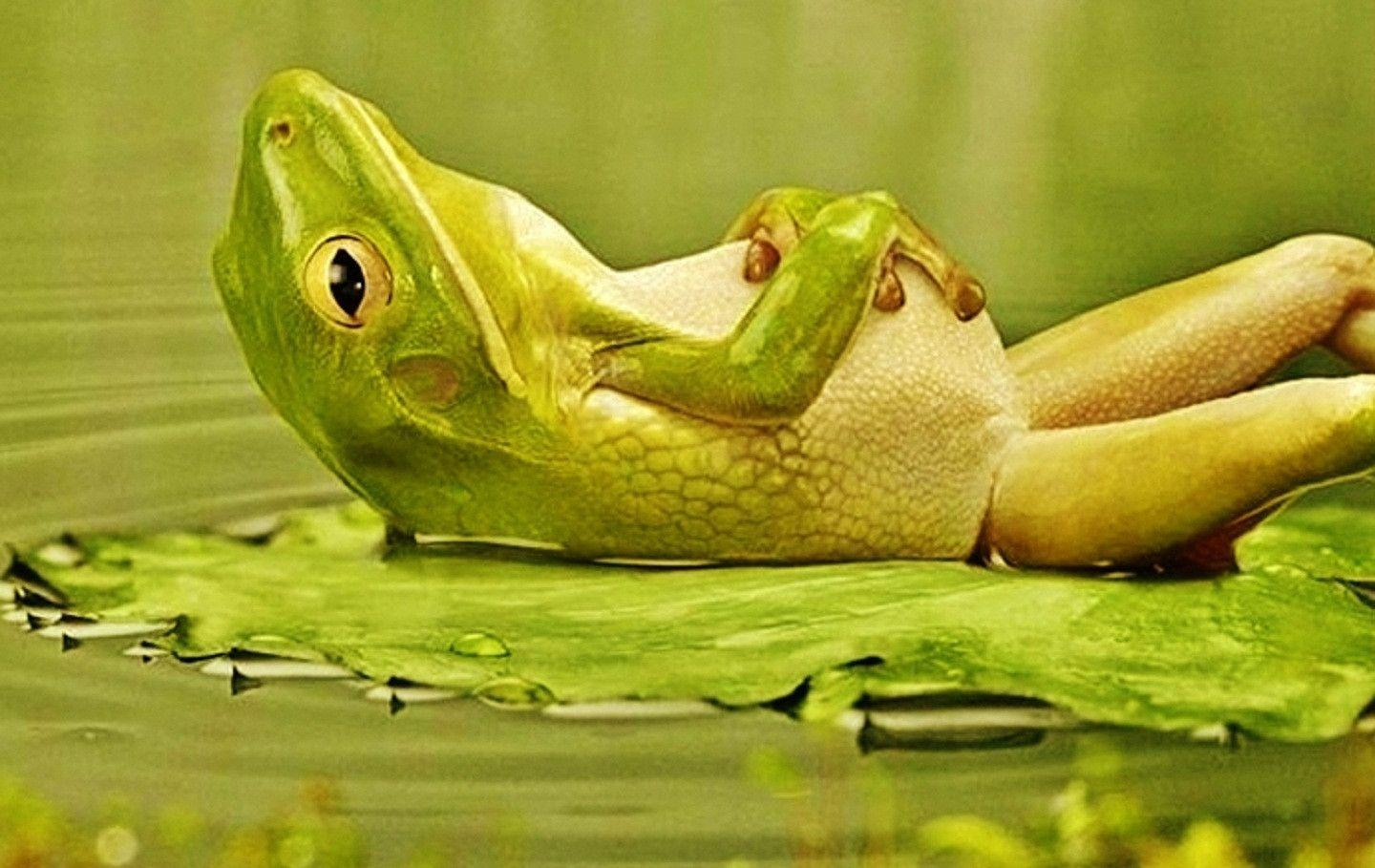 75 Hd Animals Ipad Backgrounds: Funny Frog Wallpapers