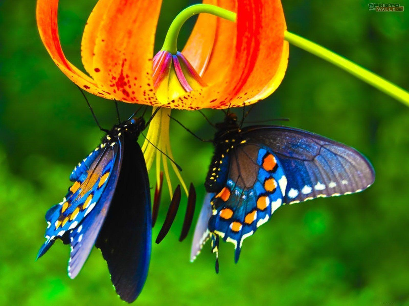 Butterfly Hd Wallpapers Wallpaper Cave