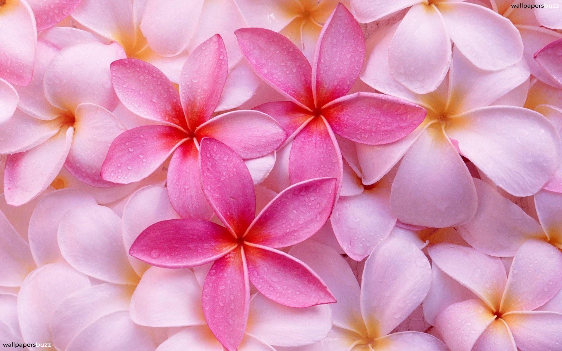 Light pink flower wallpapers wallpaper cave flowers for light pink flowers wallpaper mightylinksfo