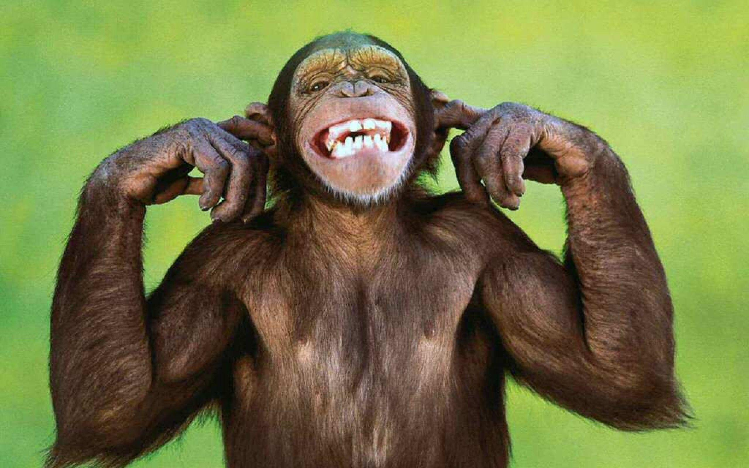funny monkey wallpaper - photo #6