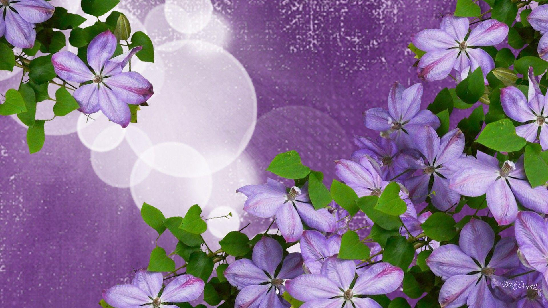 lavender flowers wallpapers 2560x1440 - photo #12