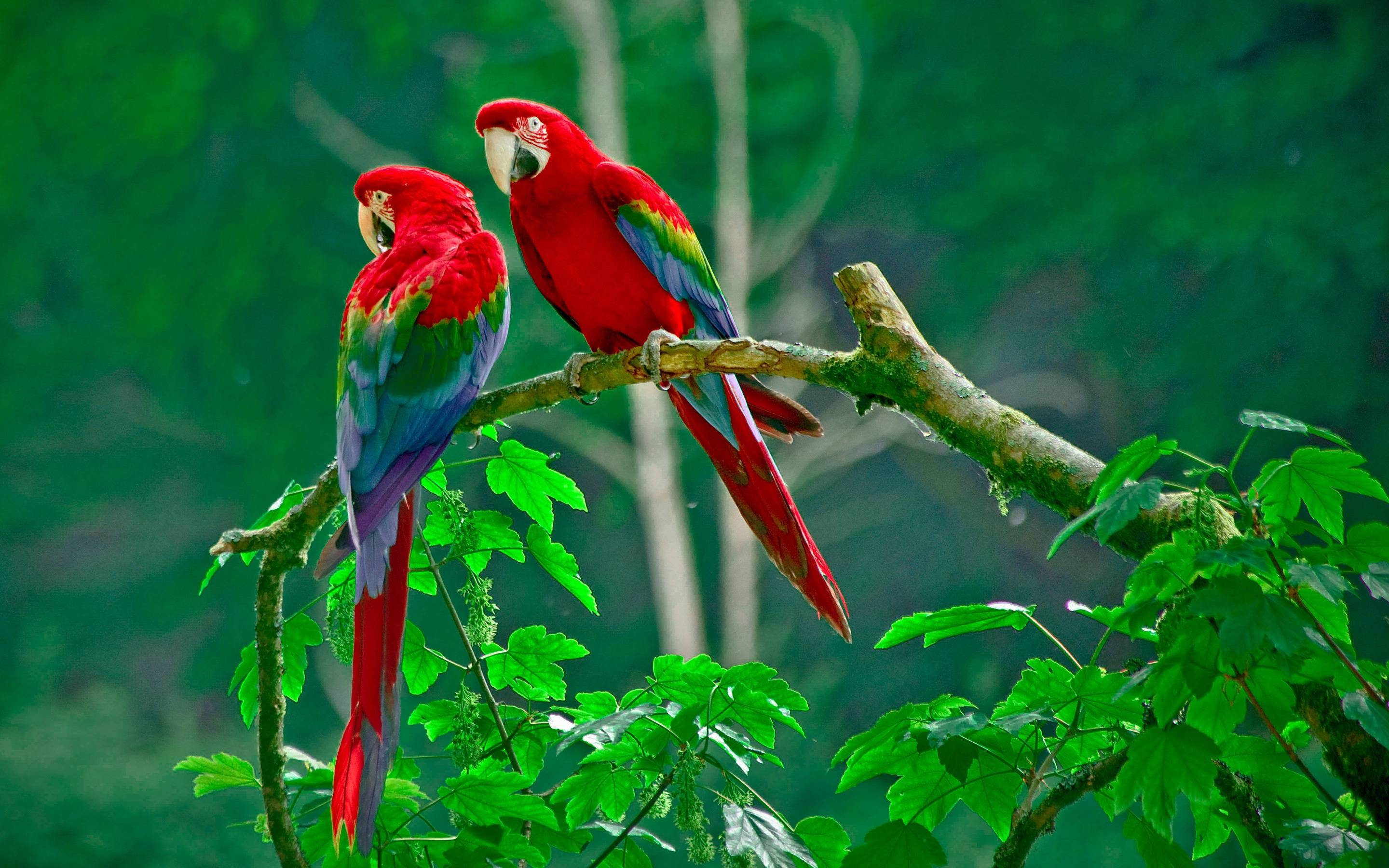 Animals Wallpapers | Birds Wallpapers | HD Desktop Backgrounds ...