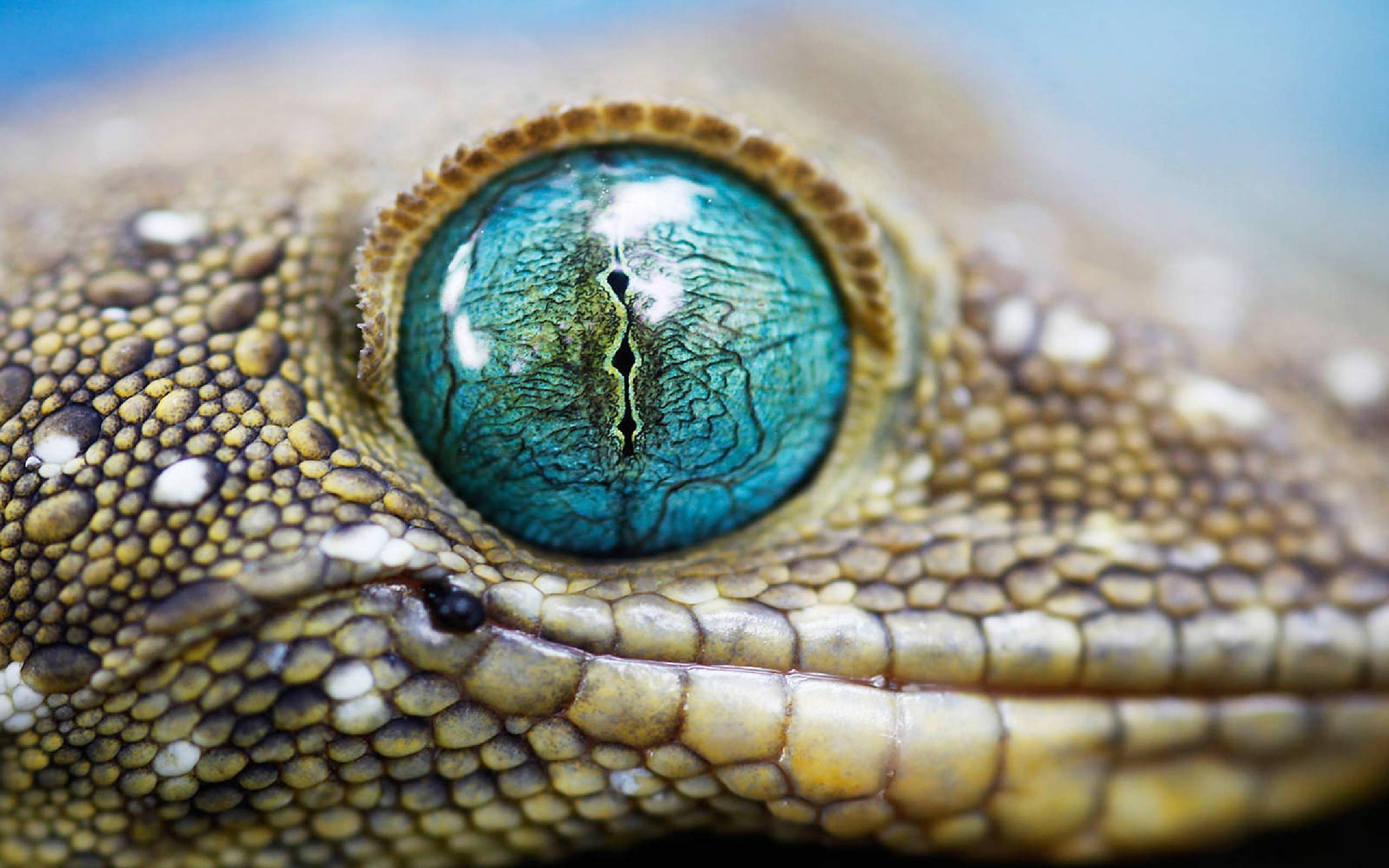 269 Lizard Wallpapers | Lizard Backgrounds Page 6
