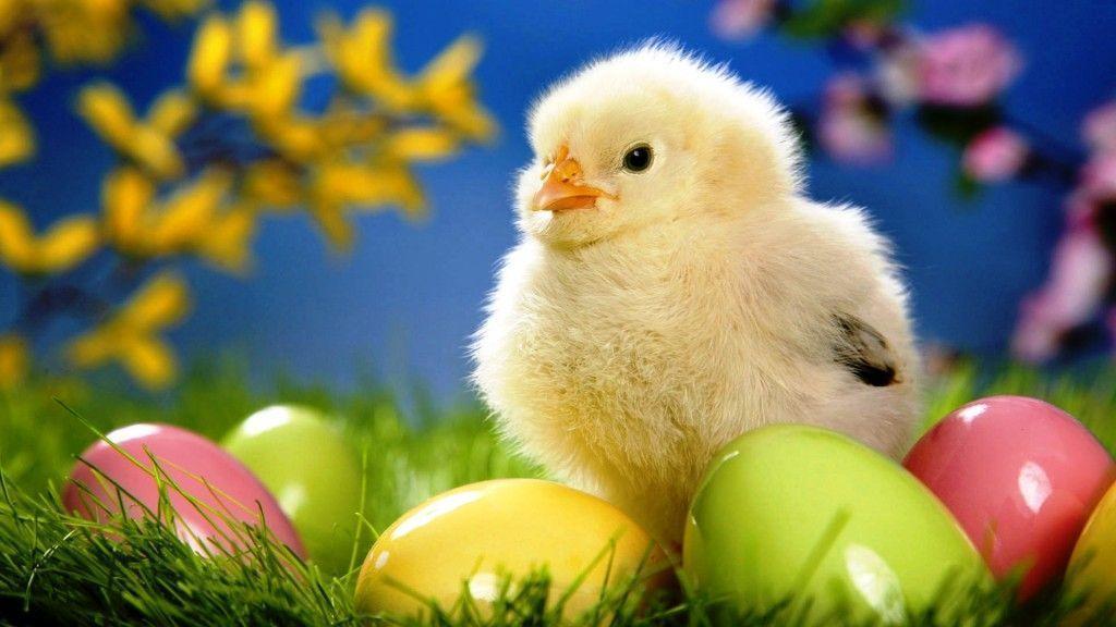 Free Easter Desktop Wallpapers